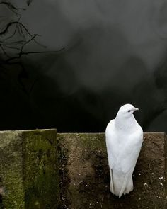 50 Incredible Examples of 'Best Shot' Wildlife Photography Dove Pigeon, Hope Is The Thing With Feathers, Saint Esprit, White Doves, All Nature, Wildlife Photography, Beautiful Birds, Beautiful Places, Pet Birds