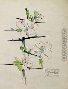 Love Mackintosh flower paintings-so delicate