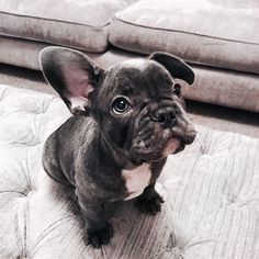"""Exceptional """"bulldog puppies"""" information is offered on our web pages. Take a look and you wont be sorry you did. Cute Puppies, Cute Dogs, Dogs And Puppies, Doggies, Bulldog Puppies, Animals And Pets, Baby Animals, Cute Animals, Wild Animals"""