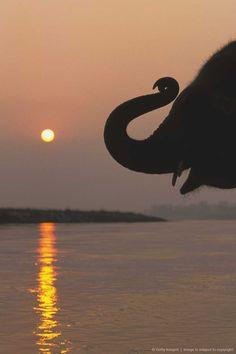 Elephant, Chitwan National Park, Nepal