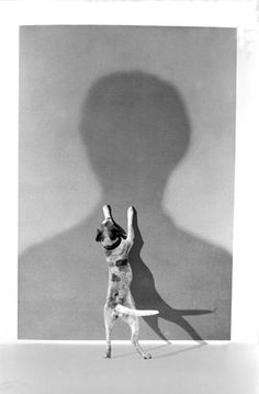 L'ombre du maître (The shadow of the Master) by Gilbert Garcin. Black And White People, Black And White Dog, Black N White Images, Photomontage, Gilbert Garcin, Oui Oui, Animal Photography, People Photography, Photography Ideas