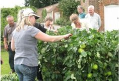 LINK TO AMTEUR GARDENER COURSES AT EAST MALLING RESEARCH KENT Gardening Courses, Short Courses, Research, Workshop, Tours, Cherries, Couple Photos, Apples, Fruit