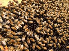Drought Is Driving Beekeepers and Their Hives From California   The California Report   KQED News