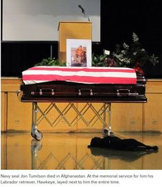 Navy seal Jon Tumilson died in Afghanastan. At the memorial service for him, his Labrador Retriever, Hawk eye, layed next to him the entire time.