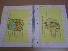 Pasting graphic organizers into notebooks with SPIs = great idea (Also a 5th grade lesson on cells is linked here)