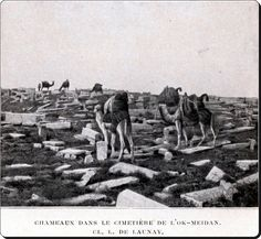 Camels in Okmeydanı cemetery. Istanbul Pictures, Ottoman Empire, Historical Pictures, Once Upon A Time, Cemetery, Old Photos, Past, Nostalgia, Black And White