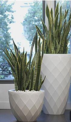 New easy patio plants flower pots ideas House Plants Decor, Patio Plants, Potted Plants, Large Outdoor Planters, Outdoor Pots, Modern Planters, Outdoor Lounge, Decoration Plante, Interior Plants