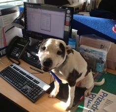 Community Post: If Dogs Worked In Offices