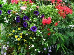 Hanging Baskets � the Squish Factor
