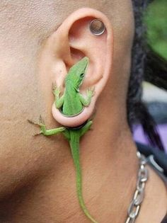   The 14 Weirdest Things People Put In Their Gauges