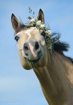 beautiful smiling horse...