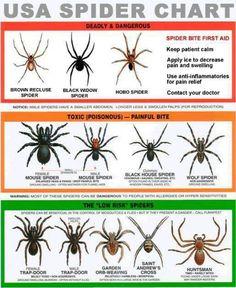 Spiders.....EEK!!!!