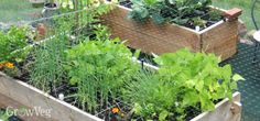 Planning a Square Foot Vegetable Garden Types Of Vegetables, Planting Vegetables, Growing Vegetables, Veggies, Growing Tomatoes, Vegetable Garden Planner, Vegetable Gardening, Kitchen Gardening, Veggie Gardens
