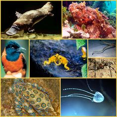 Los 8 animales más venenosos del planeta