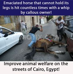Improve animal welfare on the streets of Cairo, Egypt! Sign the Petition…