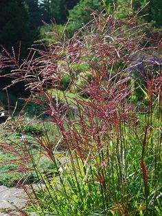 Popular Types Of Herb Gardens Green Garden, Herb Garden, Garden Plants, Amazing Grass, Drought Tolerant Garden, Types Of Herbs, Hydroponic Gardening, Ornamental Grasses, Flowers