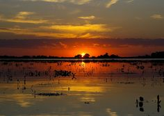 Pantanal - Brazil. One of the largest wetlands in the world.