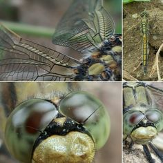 """Did you know a is able to and unless all of the former existance did transform. In this you can see the in the """"nose"""", which explained me, why it was possible to come nearby to take these incredible shots with my Isaac Newton, Macro Shots, Nymph, Vienna, Vineyard, Samsung, The Incredibles, Green, Photography"""