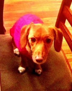 Celebrate National Dress Up Your Pet Day! - Woburn, MA Patch