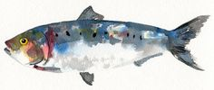 A4 Watercolour Print of a Sardine Fish by HannahLClark on Etsy