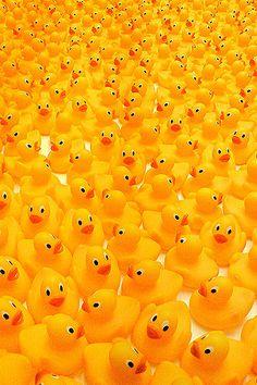 Rubber Duckies :)  ::