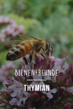 Bienenfreunde: Thymian. Rettet die Bienen! Wir sagen euch, wie ihr euren Garten und Balkon bienenfreundlich machen könnt. Damit pflanzt ihr nicht nur schöne, duftende Blumen und leckere Kräuter für euch, sondern auch wichtige Nahrungsquellen für die Bienen.