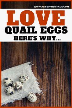 Quail eggs on a rag on a counter Raising Quail, Raising Farm Animals, Raising Chickens, Backyard Chicken Coops, Chickens Backyard, Quail Eggs Benefits, Quail Coop, Hatching Chickens, Day Old Chicks