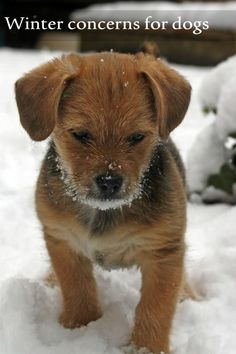 Cold weather is tough on our animal companions! Check out these winter concerns for your dog that you may not have considered. Following these important dog safety tips will keep your best friend safe all season long.