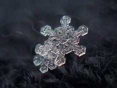 Flocos de Neve por Alexey Kljatov