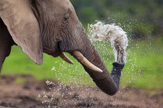 A young elephant sprays himself with water at Hapoor Dam in Addo Elephant National Park, South Africa |  © Mario Moreno