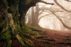 - Mystery Keepers by Florent Courty - Chaine des Puys, France Amazing Photography, Landscape Photography, Nature Photography, Senior Photography, Enchanted, Maleficarum, Mystery, Picture Tree, Old Trees