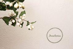 이미지 출처 http://ruffledmedia.ruffled.netdna-cdn.com/wp-content/upLoads/snowberries-winter-wedding-flowers/snowberries-winter-weddings-002.jpg