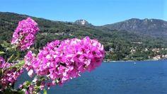 Turin, Bologna, Verona, Comer See, Parma, Capri, Plants, Italy, Genoa