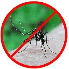 Chieti: nuovi interventi di disinfestazione - Attualità - Primo Piano #zanzare #insetticida
