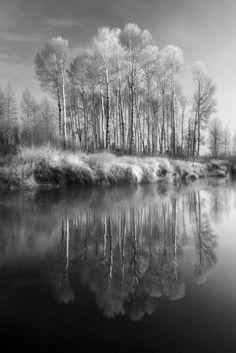 Sprague River Aspens    Infrared photography.