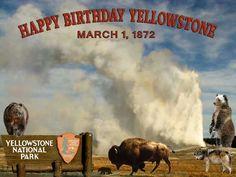 Happy Birthday Yellowstone National Park - March 1