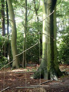 Takkengordijn in het Overbosch