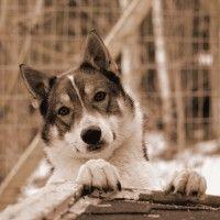 Niin kaunis koira!