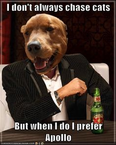 He's...the Most Interesting Dog in the World