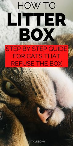 Is your cat refusing the litter box? There may be a medical reason or the box isn't clean enough. Cats are clean creatures that prefer a clean bathroom. Use these litter supplies to keep the litter area clean. I only spend 5 mins a week on litter box maintenance. Use my litter care routine! This is the best way to keep your cat going inside the box. These litter box solutions work for every cat because cats deserve a clean bathroom. I've scooped hundreds of boxes, this is the best litter routine Best Cat Litter, Litter Box, Healthy Cat Food, Calming Cat, How To Cat, Sick Cat, Living With Cats, Mean Cat, Cat Hacks