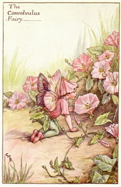 THE CONVOLVULUS FAIRY - by Cicely Mary Barker   Flickr