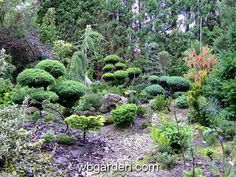 dwarf conifers and witch´s brooms gardening | Gardens