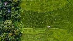Thailand rice fields -Aerial Shot Photo by Duey Moore — National Geographic Your Shot