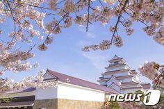 Japan、일본 봄꽃 여행지 베스트 5