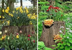 These planters turn an old tree stump into a planter garden. Try doing this as well instead of dealing with the hassle of a tree stump removal. Flower Planters, Garden Planters, Succulents Garden, Garden Art, Fairies Garden, Hanging Planters, Flower Pots, Garden Ideas, Tree Stump Planter