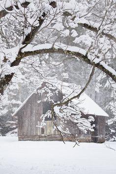 Winter Wonderland, I love winter. Winter Szenen, I Love Winter, Winter Magic, Winter White, Winter Christmas, Deep Winter, Snow Scenes, Winter Pictures, Winter Beauty