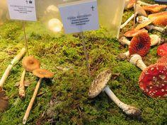 Panter-kärbseseen - Veeseire Surface Mining, Bee Keeping, Stuffed Mushrooms, Stuff Mushrooms