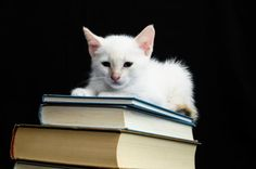 20 Fun Facts About Our Mysterious Feline Friends - I always knew cats were smarter than dogs!