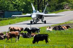 Swiss Air Force operations tightly interlinked with farming ;-) McDonnell Douglas F18 via Aviation Week.