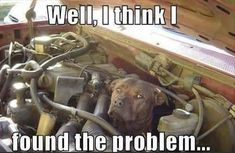 24 Funny Animal Memes And Pictures Of The Day #PitBullMemes